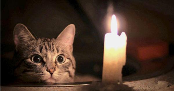 Магические кошки