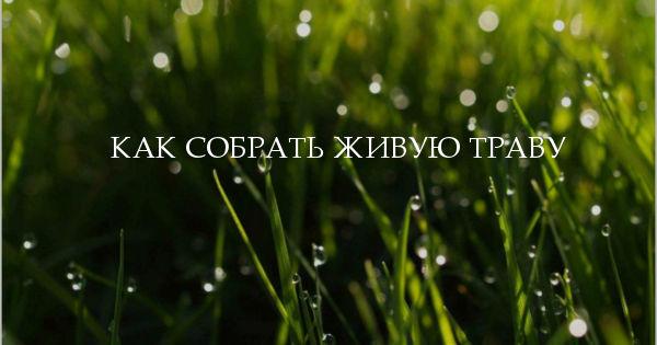 как собрать живую траву