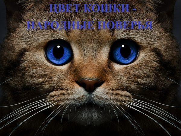 Магическая природа кошек