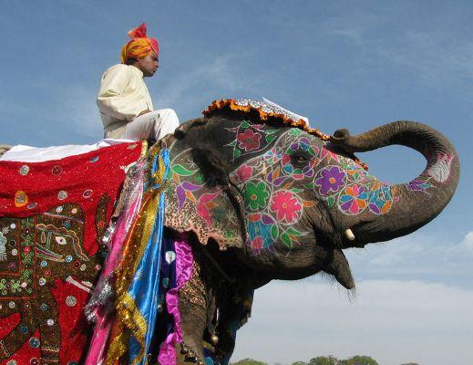 индийский слон на праздничном шествии