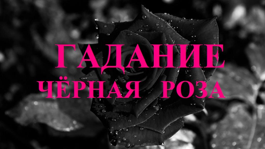 оракул черная роза