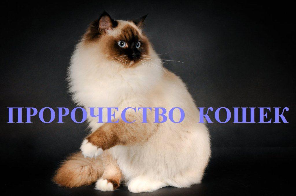 пророчество кошек