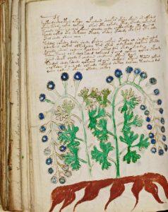 Иллюстрация фантасмагорических растений в рукописи Войнича