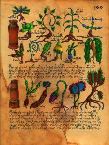 Растения с горы Кайлас