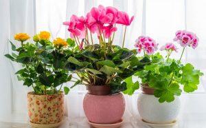 Комнатные растения и магия